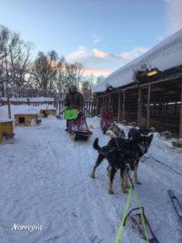 norvegia - cani da slitta